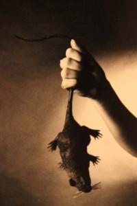 Ratte 0